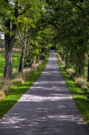 en mont�e: Route qui monte sous les arbres en Allemagne