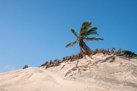 Sand dunes with palms, Pititinga, Natal  Brazil  photo