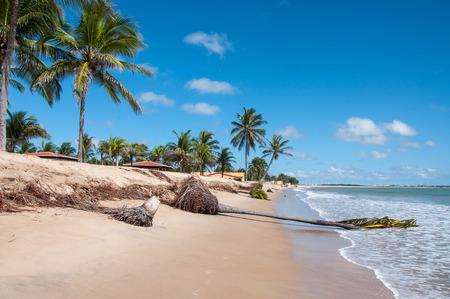 brazil beach: Eroded beach with palms, Pititinga, Natal  Brazil