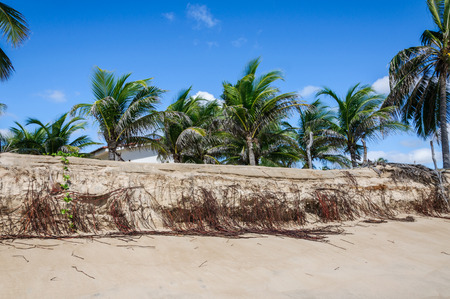 Eroded beach with palms, Pititinga, Natal  Brazil  photo