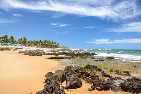 forte: Beach of Praia do Forte with colored beach umbrellas, Salvador de Bahia  Brazil