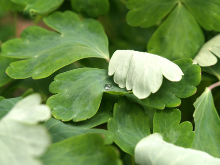 Pearl Rain Drop on Leaf photo