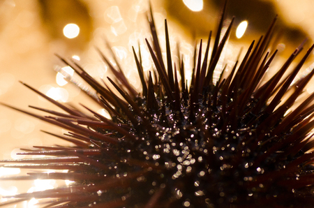 Detail of sea urchin Stock Photo