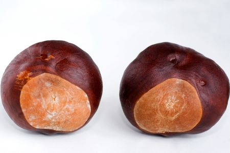 conkers: two conkers