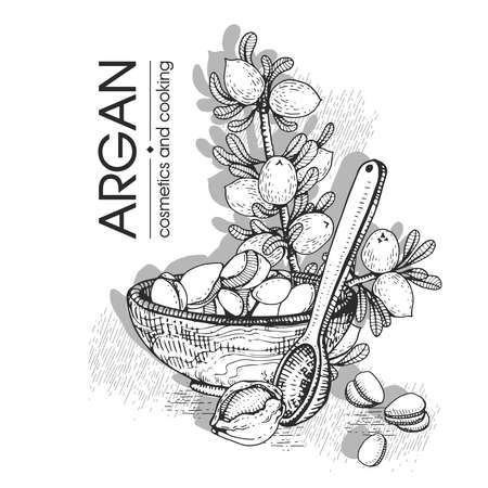 Composition with branch argan tree with fruits, nuts argans, leaves and accessories Detailed hand-drawn sketches, vector botanical illustration. For menu, label, packaging design. Stock fotó - 155618055