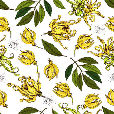 Seamless Pattern with flowers and leaves of ylang-ylang. Detailed hand-drawn sketches, vector botanical illustration. For textile, background, packaging design.