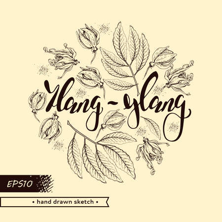 Circle with flowers and leaves of ylang-ylang and hand drawn lettering ylang-ylang. Detailed hand-drawn sketches, vector botanical illustration. For menu, label, packaging design.