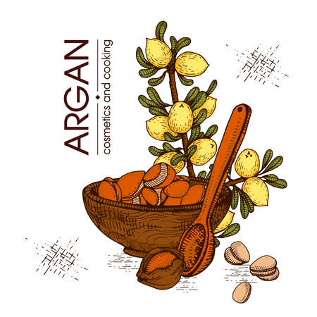 Composition with branch argan tree with fruits, nuts argans, leaves and accessories Detailed hand-drawn sketches, vector botanical illustration. For menu, label, packaging design. Stock fotó - 155618118