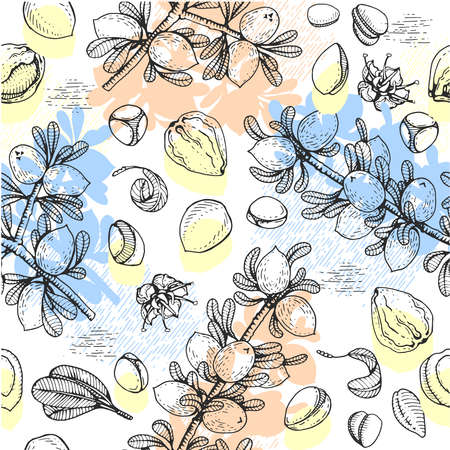 Seamless Pattern with branch argan tree with fruits, nuts argans, leaves, flower argans Detailed hand-drawn sketches, vector botanical illustration. For menu, label, packaging design. Stock fotó - 155618122