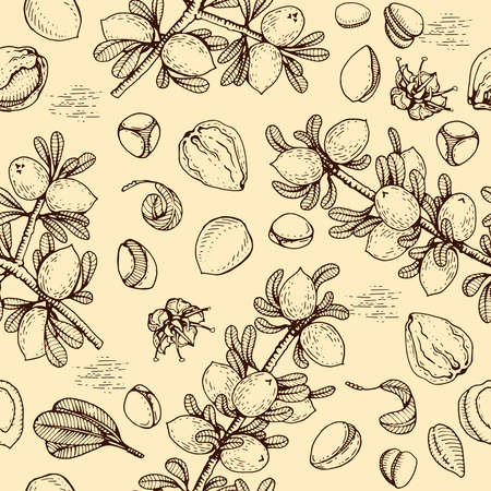 Seamless Pattern with branch argan tree with fruits, nuts argans, leaves, flower argans Detailed hand-drawn sketches, vector botanical illustration. For menu, label, packaging design.