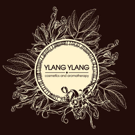 Frame with flowers and leaves of ylang-ylang. Detailed hand-drawn sketches, vector botanical illustration. For menu, label, packaging design.