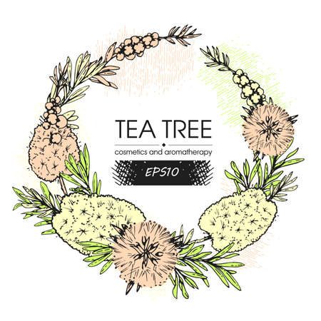 Frame with branches with leaves and flowers of tea tree . Detailed hand-drawn sketches, vector botanical illustration. Vetores
