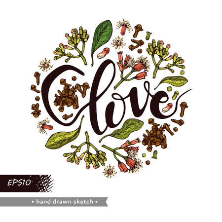 Circle filled branches of a carnation tree with leaves, buds and flowers and lettering Clove . Detailed hand-drawn sketches, vector botanical illustration. 矢量图像
