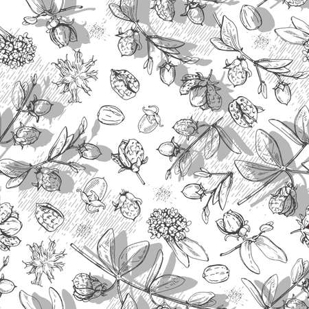 Seamless Pattern with Jojoba branches with fruits and flowers, leaves. Fruit jojoba in a peel and without. Detailed hand-drawn sketches, vector botanical illustration. For textile, background, packaging design.