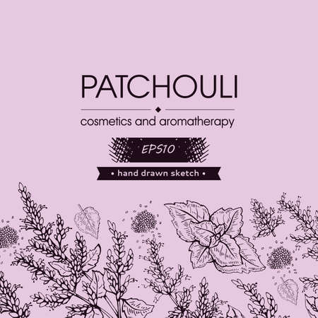 Background with Patchoulis inflorescences and flowers and branch with leaves. Detailed hand-drawn sketches, vector botanical illustration. For menu, label, packaging design.