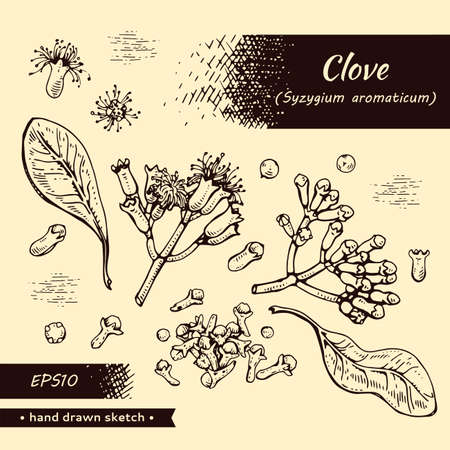 Collection of branches of a carnation tree with leaves, buds and flowers. Detailed hand-drawn sketches, vector botanical illustration. For menu, label, packaging design.