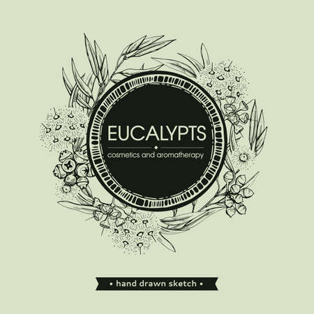 Frame with Eucalyptus leaves, young shoots and branches of eucalyptus with flowers, buds and seeds. Detailed hand-drawn sketches, vector botanical illustration. For menu, label, packaging design