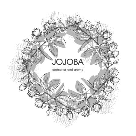 Frame with Jojoba branches with fruits and flowers, leaves. Fruit jojoba in a peel and without. Detailed hand-drawn sketches, vector botanical illustration. For menu, label, packaging design.