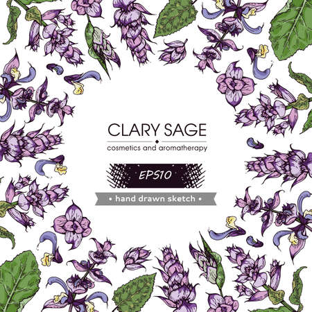 Background filled with Clary sage twigs with leaves and flowers and with empty circle inside. Detailed hand-drawn sketches, vector botanical illustration. For menu, label, packaging design.