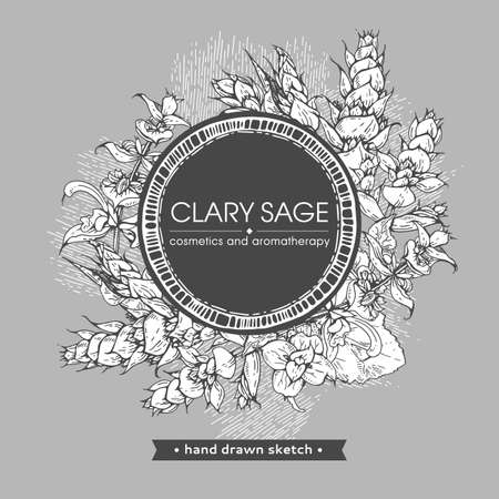 Frame with Clary sage twigs with leaves and flowers. Detailed hand-drawn sketches, vector botanical illustration. For menu, label, packaging design.