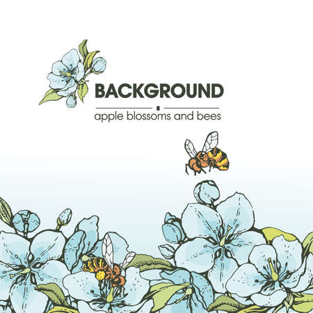 Background with apple flowers and bees. Detailed hand-drawn sketches, vector botanical illustration. For cosmetics, medicine, aromatherapy. For menu, label, packaging design. 矢量图像