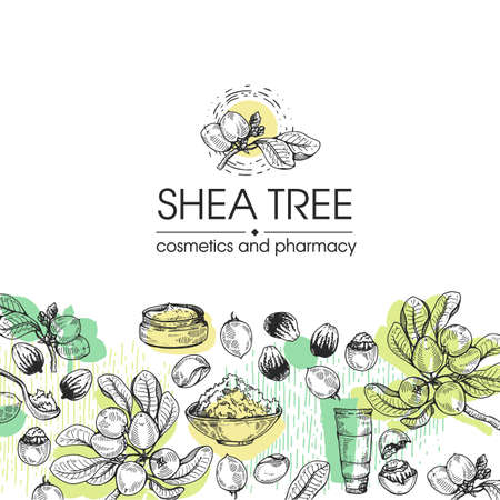 Background with branch Shea tree with fruits, nuts, leaves and Shea butter and wooden plate with shea butter, spoon filled with shea butter, cream in jar, cream in tube. Detailed hand-drawn sketches, vector botanical illustration. For cosmetics, medicine, aromatherapy. For menu, label, packaging design.