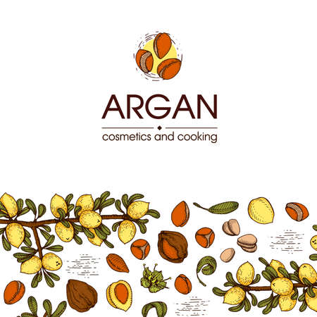 Composition with branch argan tree with fruits, nuts argans, leaves and accessories Detailed hand-drawn sketches, vector botanical illustration. For menu, label, packaging design. 免版税图像 - 157950611