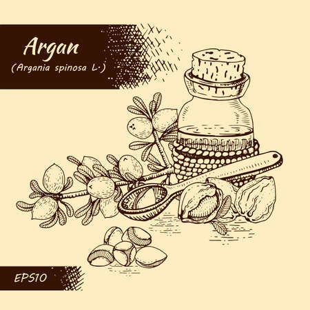 Composition with branch argan tree with fruits, nuts argans, leaves and glass bottle with oil and accessories Detailed hand-drawn sketches, vector botanical illustration. For menu, label, packaging design. 矢量图像