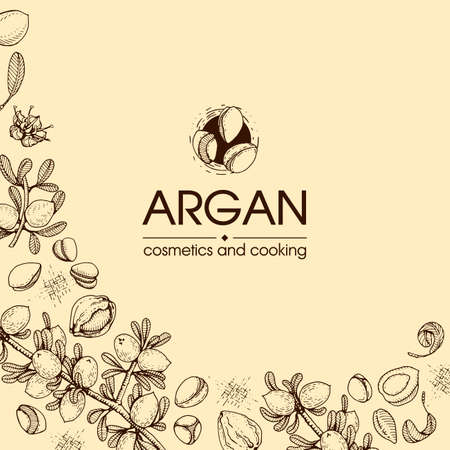 Composition with branch argan tree with fruits, nuts argans, leaves and accessories Detailed hand-drawn sketches, vector botanical illustration. For menu, label, packaging design.