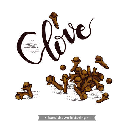 Dried clove spice slide and lettering Clove. Detailed hand-drawn sketches, vector botanical illustration. For menu, label, packaging design.