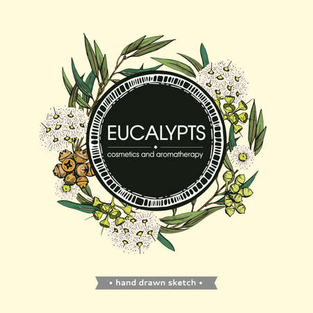 Frame with Eucalyptus leaves, young shoots and branches of eucalyptus with flowers, buds and seeds. Detailed hand-drawn sketches, vector botanical illustration. For menu, label, packaging design Ilustração
