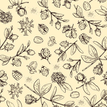Seamless Pattern with Jojoba branches with fruits and flowers, leaves. Fruit jojoba in a peel and without. Detailed hand-drawn sketches, vector botanical illustration. For textile, background, packaging design. Vektorové ilustrace