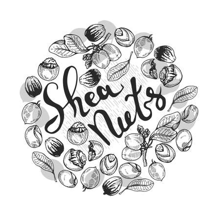 Background with branch Shea tree with fruits, nuts, leaves and Shea butter and wooden plate with shea butter, spoon filled with shea butter, cream in jar, cream in tube. Detailed hand-drawn sketches and lettering, vector botanical illustration. For cosmetics, medicine, aromatherapy. For menu, label, packaging design.