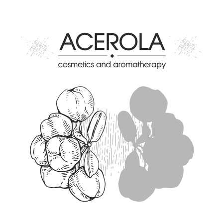 Branch acerola cherry, fruit, flower. Detailed hand-drawn sketches, vector botanical illustration. For menu, label, packaging design. Illusztráció