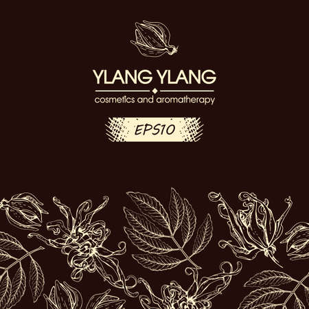 Background with flowers and leaves of ylang-ylang. Detailed hand-drawn sketches, vector botanical illustration. For menu, label, packaging design.