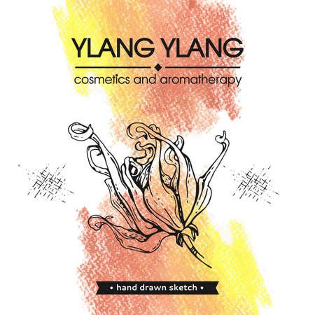 Flowers and leaves of ylang-ylang. Detailed hand-drawn sketches, vector botanical illustration. For menu, label, packaging design. Illusztráció