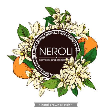 Frame with bitter orange flowers, buds, fruits. Detailed hand-drawn sketches, vector botanical illustration. For menu, label, packaging design. Illusztráció