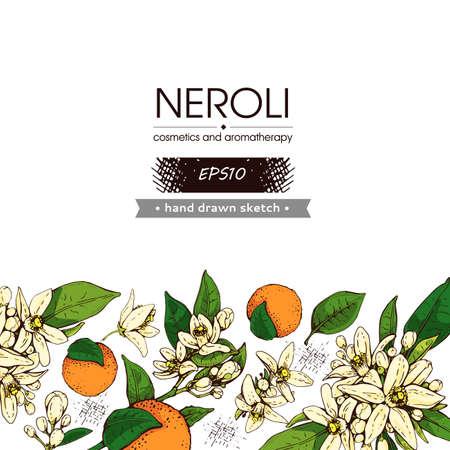 Background with bitter orange flowers, buds, fruits. Detailed hand-drawn sketches, vector botanical illustration. For menu, label, packaging design.