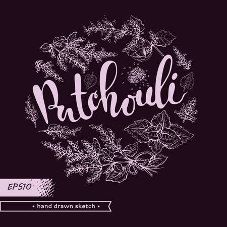 Circle filled Patchoulis inflorescences and flowers with lettering Patchouli. Detailed hand-drawn sketches, vector botanical illustration. For menu, label, packaging design. Illusztráció