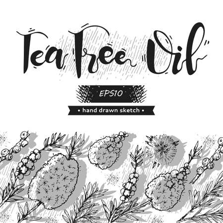 Background with branches with leaves and flowers of tea tree and lettering. Detailed hand-drawn sketches, vector botanical illustration. For menu, label, packaging design.