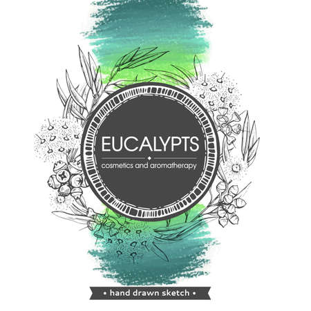 Frame with Eucalyptus leaves, young shoots and branches of eucalyptus with flowers, buds and seeds . Detailed hand-drawn sketches, vector botanical illustration. Stock fotó - 158495690