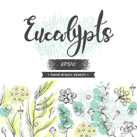 Background with Eucalyptus leaves, young shoots and branches of eucalyptus with flowers, buds and seeds and lettering Eucalypts. Detailed hand-drawn sketches, vector botanical illustration.