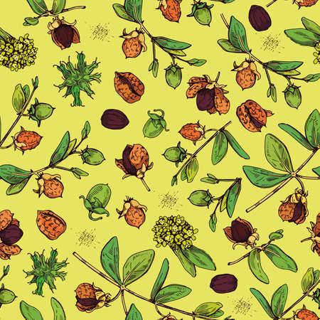 Seamless Pattern with Jojoba branches with fruits and flowers, leaves. Fruit jojoba in a peel and without . Detailed hand-drawn sketches, vector botanical illustration.