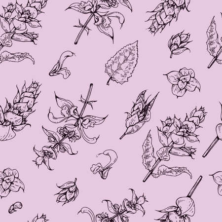 Seamless Pattern with Clary sage twigs with leaves and flowers . Detailed hand-drawn sketches, vector botanical illustration.