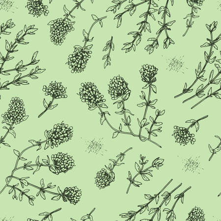 Seamless Pattern with twig of thyme with leaves and flowers. Detailed hand-drawn sketches, vector botanical illustration. Ilustração