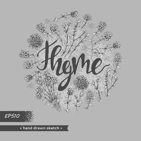 Circle filled twig of thyme with leaves and flowers and lettering Thyme. Detailed hand-drawn sketches, vector botanical illustration.