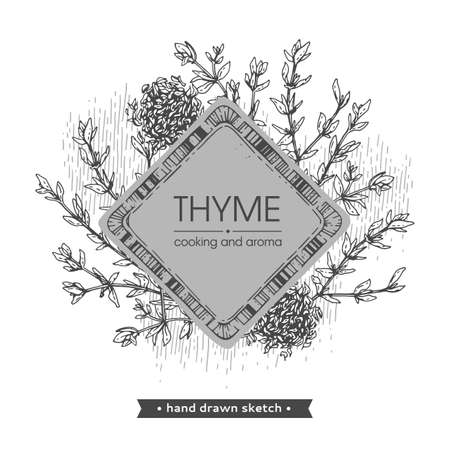 Frame with twig of thyme with leaves. Detailed hand-drawn sketches, vector botanical illustration