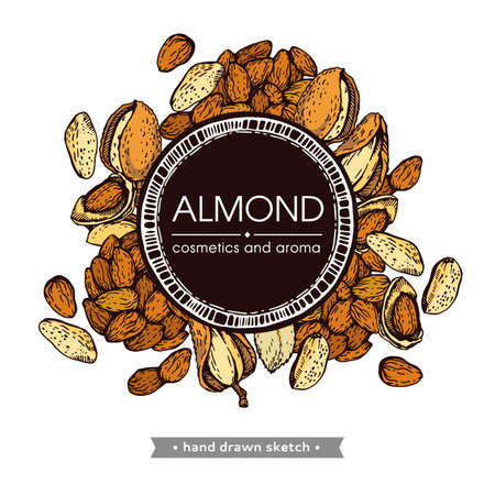 Frame with Almond kernels of nuts. Detailed hand-drawn sketches, vector botanical illustration. Illusztráció