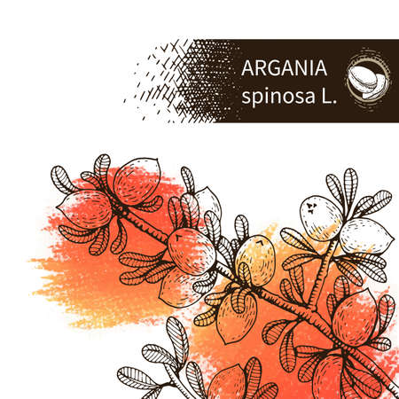 Background with branch argan tree with fruits. Detailed hand-drawn sketches, vector botanical illustration. For menu, label, packaging design