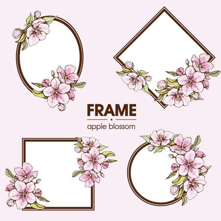 Frame with apple flowers. Detailed hand-drawn sketches, vector botanical illustration. For cosmetics, medicine, aromatherapy. For menu, label, packaging design.